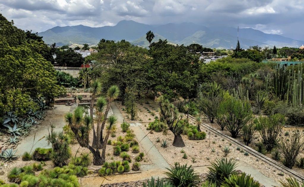 Jardin Etnobotanico Oaxaca