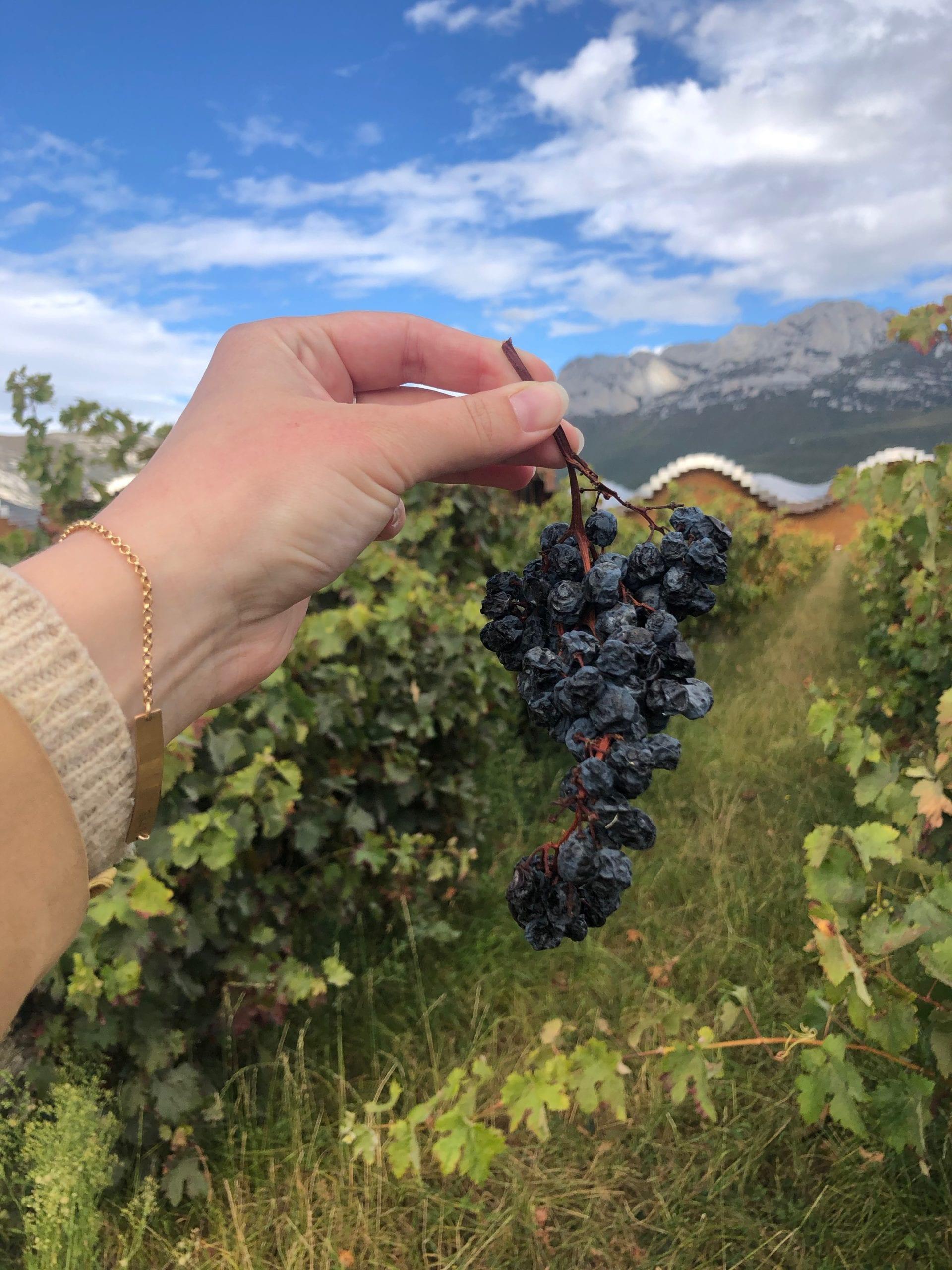 grapes la rioja spain